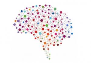 cerveau - liens